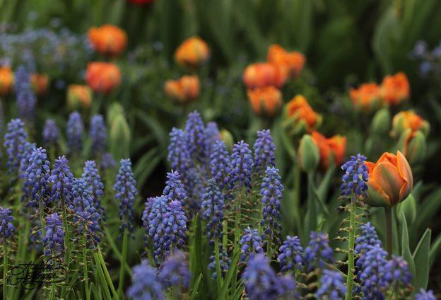 Spring at last! În sfârșit primăvară!
