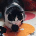 Kitty crochet toy – Jucarie crosetata pentru pisica